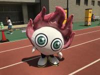 共生スポーツ祭り2017@東京体育館 TBSブース
